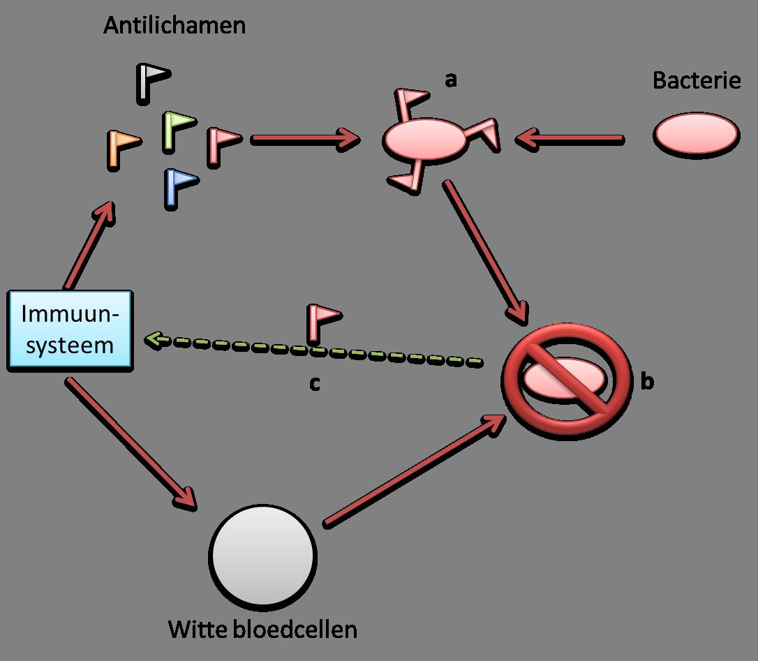 Schema van het immuunsysteem