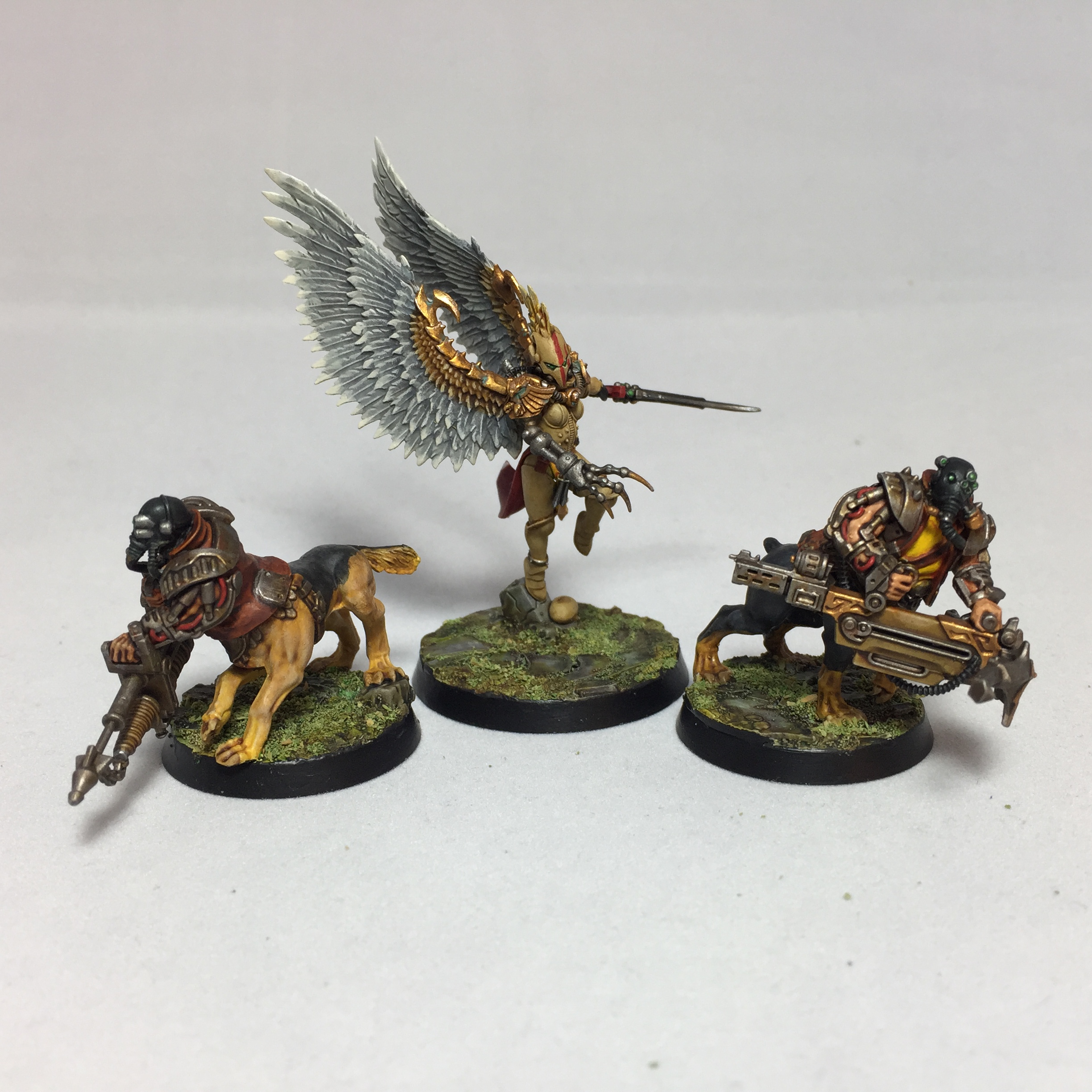 The Hawk and the Hounds